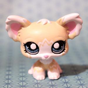 chihuahua1