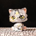 #017 Suzu (my cat)
